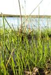 61. Llangloffan Fen, Pembrokeshire