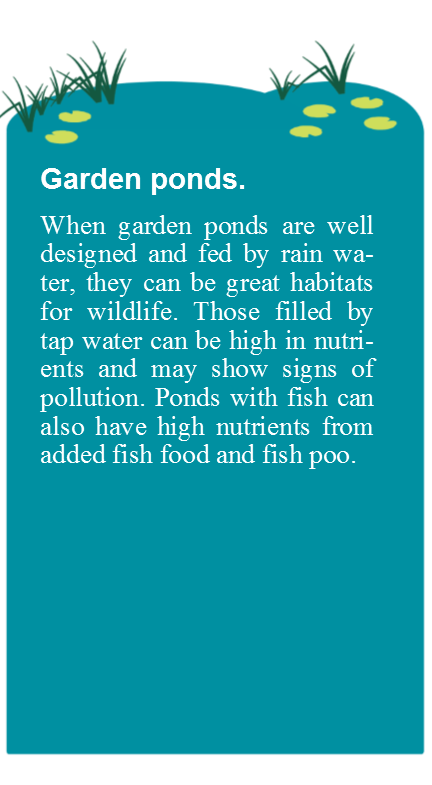Garden Pond with text