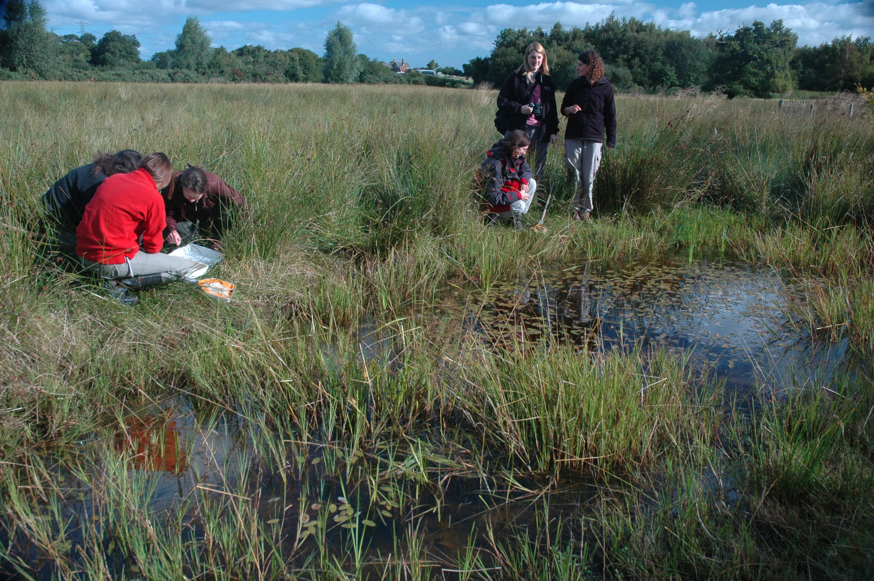 6_New pond in North Wales to encourage Great Crested Newts