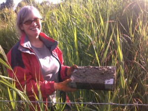 Ann Hanson from Yorkshire Mammal Group found a raft covered in a Water Vole latrine