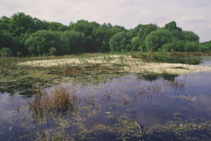 Flagship Pond site Brown Moss in the 1990s (c) Natural England