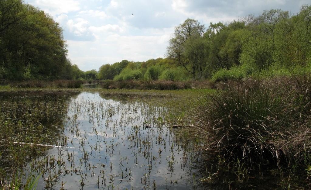 Flagship Pond site Brown Moss (c) Nigel Jones