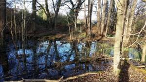 Mud Snail Pond Lane End