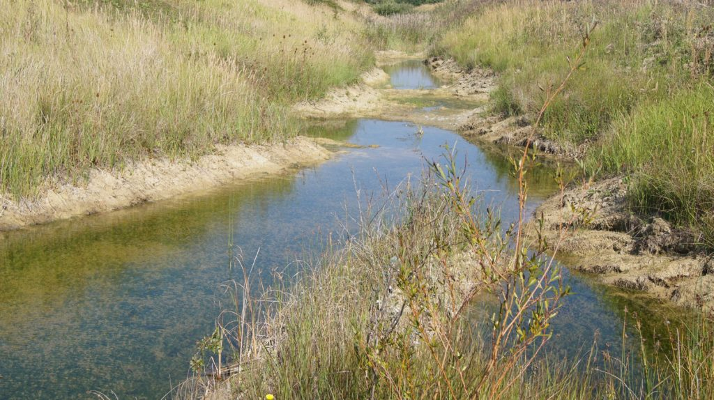 Orton Pits recently restored pond rich in charophytes (c) Liz Morrison Froglife 2015