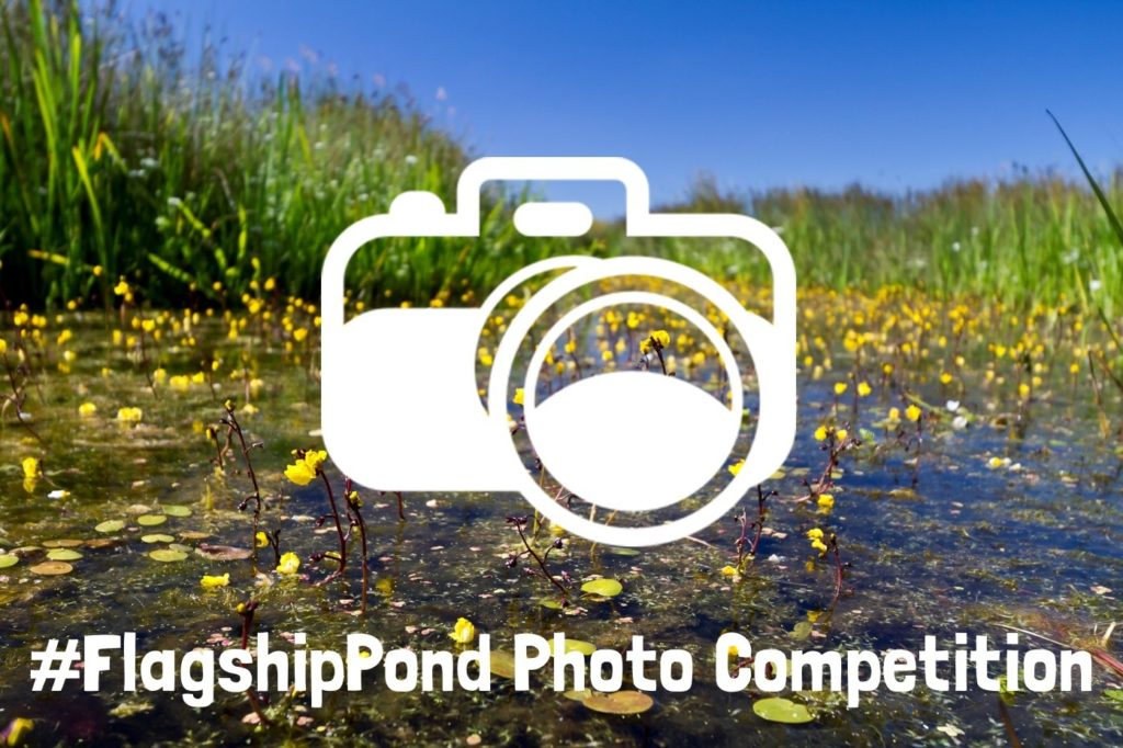 flagship-pond-photo-comp-graphic-bladderwort-01