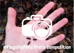 Flagship Pond photo competition mud snail graphic