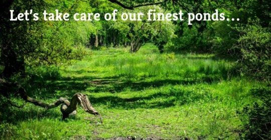 Flagship Pond Appeal lets take care