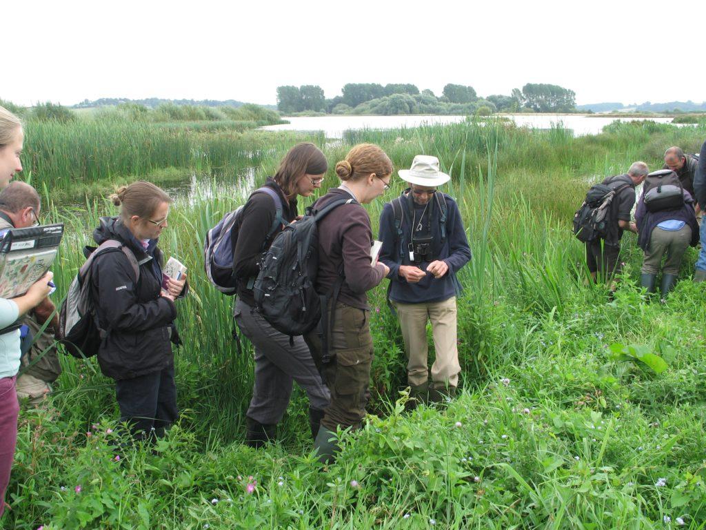 bsbi-field-meeting-at-rutland-water-nnr-2013-image-mags-crittenden