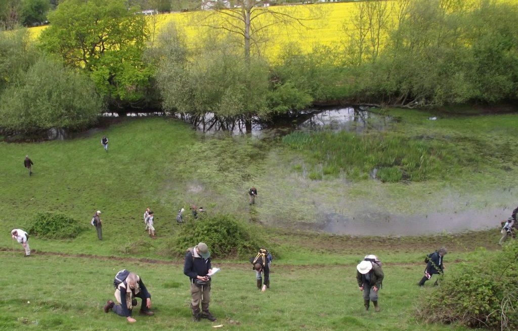 botanists-at-cock-marsh-bsbi-summer-meeting-2012-image-uta-hamzaoui