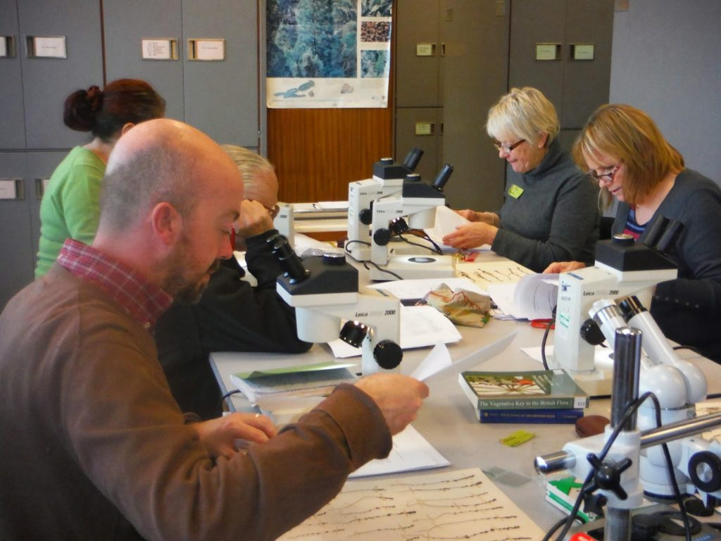 A training workshop on Eyebright identification at the University of Leicestershire Herbarium in 2015 (c) Louise Marsh