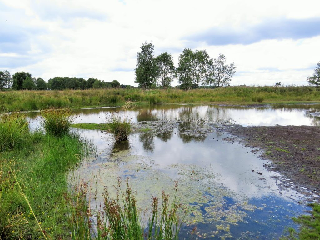 Flagship Pond site Strensall Common is home to the tiny aquatic fern Pillwort and many other special pond plants and animals. Photo: Anne Heathcote/Freshwater Habitats Trust