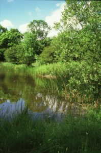 Castor Hanglands: the richest pond in the country (c) Natural England/Paul Glendell 1999