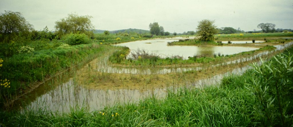 Pinkhill Meadow in the early days (c) Environment Agency