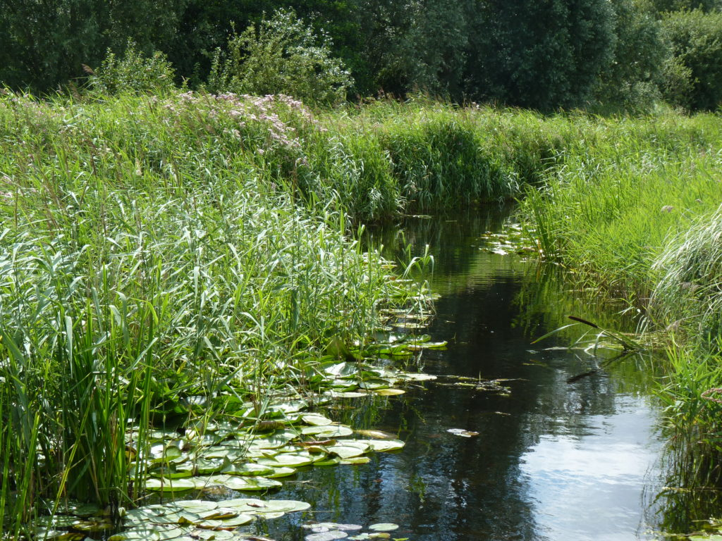 Variable Damselfly habitat at Wicken Fen, Cambridgeshire (c) Mark Ellam