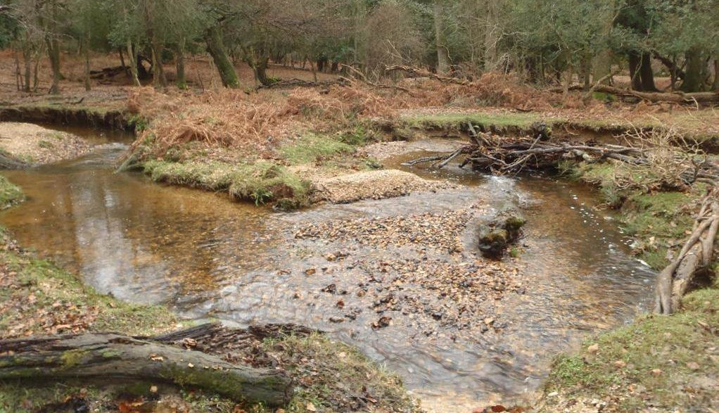 New Forest river by Dominic Longley cropped