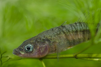 Freshwater Fish Freshwater Habitats Trustfreshwater Habitats Trust