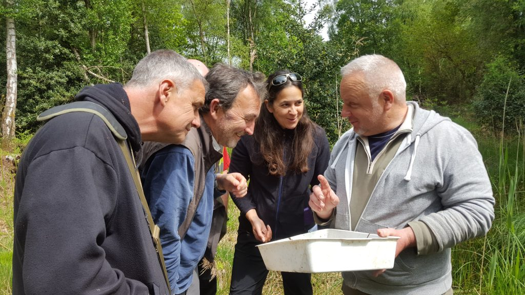 People enjoying learning about Pond Mud Snails at a Stow Bedon pond