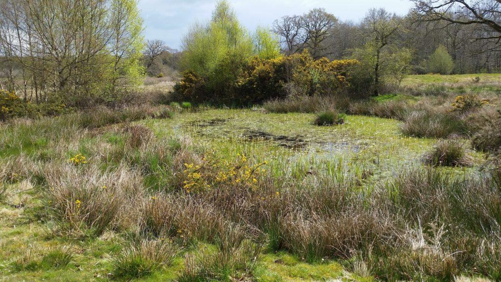 An open, sunny pingo on Stow Bedon Common