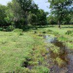 Restored New Forest stream